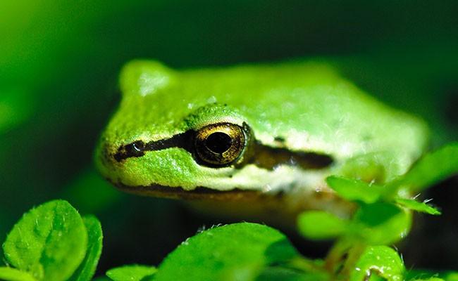 Самая одинокая лягушка на свете воспользовалась сайтом знакомств