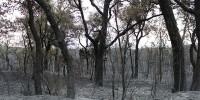 Экологи из Испании и России обменяются опытом по восстановлению лесов