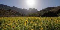 Самое «инстаграмное» поле подсолнухов в Испании