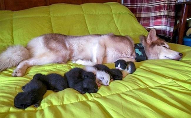 Собака спасла от гибели семь брошенных котят
