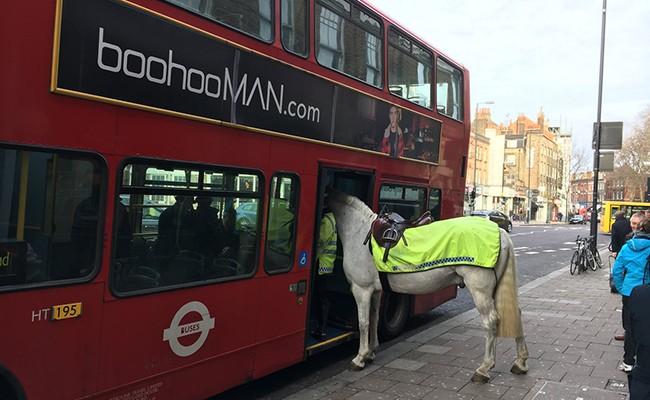 Полицейский конь пытался сесть вавтобус встолице Англии