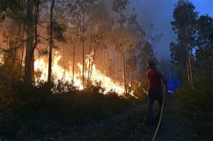 Португалия: приговор для поджигателей