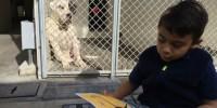 Мальчик-аутист читает книги бездомным собакам