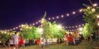 Италия: джаз в виноградниках Поццуоли