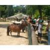 Италия: в зоопарке Неаполя открыт детский лагерь