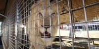Португалия: цирк - без животных?