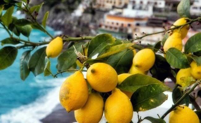 Италия: Лимонная Ночь в Майори