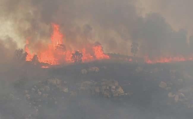 Португалия: пожар в Мангуалде продолжается