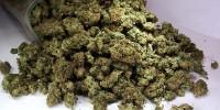 Итальянская полиция изъяла наркотиков на сумму 1,3 млрд евро