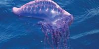 Испания: на пляже в Малаге нашли двухметровую медузу