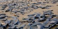 Испания: пляжи Коста-дель-Соль заполонили медузы