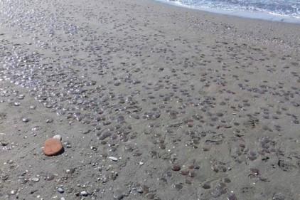 Испания: побережье Андалусии заполонили тысячи медуз