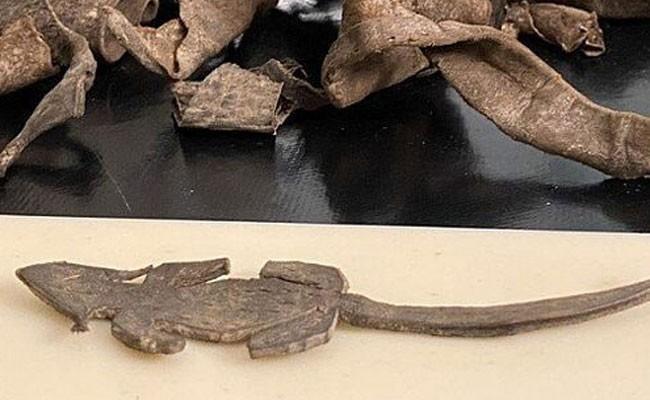 На севере Англии археологи нашли игрушечную мышь из кожи