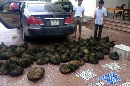Полиция Индонезии изъяла 657 замороженных муравьедов