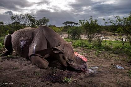 Испания: выставка лучших фотографий дикой природы