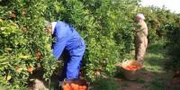 Испания разрешила принять десятки тысяч человек на сельхозработы