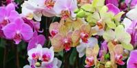 Португалия: Международная выставка орхидей