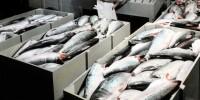 Португалия не в состоянии самостоятельно обеспечивать себя рыбой