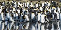 В Антарктиде ученых одурманило из-за фекалий пингвинов