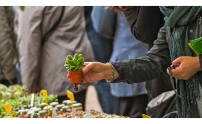 Италия: Planta 2017 в Неаполе