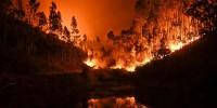 Пожары уничтожили 100 тысяч гектаров испанских земель