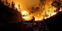 Последний очаг лесного пожара в Португалии локализован