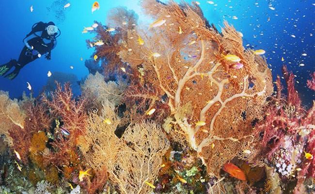 У побережья Италии нашли уникальный коралловый риф