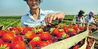 Италия: готовится к выходу новый декрет флюсси для сезонных работников