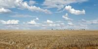 Правительство признало, что в Португалии засуха