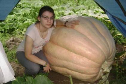 Итальянка вырастила тыкву весом 350 кг