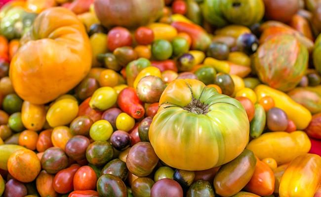 В Италии открывается томатный фестиваль «Degusta»