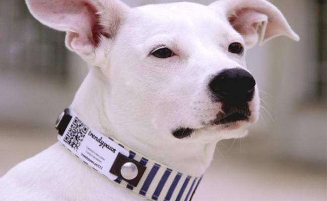Португалия: ошейники с QR-кодом для домашних животных