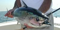 Власти Испании решили «ловить» туристов на тунца