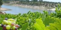 Португалия: вина Тежу получили 13 премий в Париже