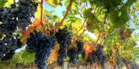 Ла-Риоха запустила экскурсионный Vinobus