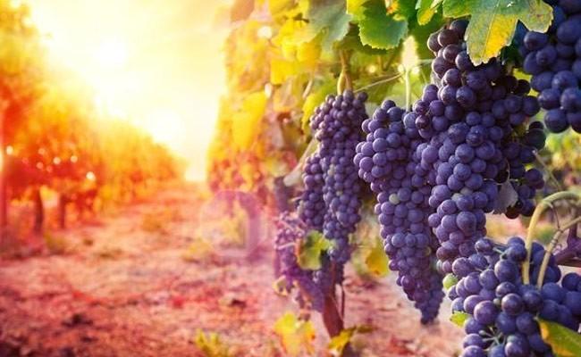Четыре испанских винодельни попали в мировой топ-50