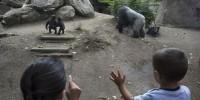 Испания: будущее зоопарка Барселоны помогут определить школьники
