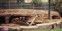 Испания: животных в зоопарке будут греть